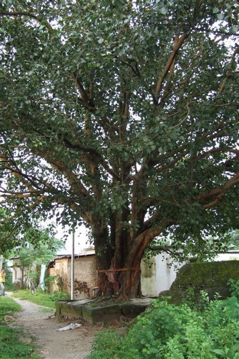 What is Tree and example of tree | Information Sharing Portal