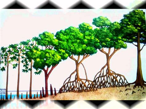 Tropical Mangrove Forest - YouTube