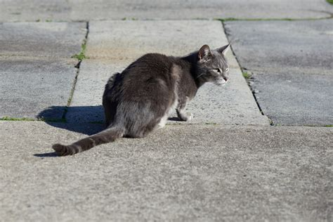 Cat Removal Near Me | All City Animal Trapping