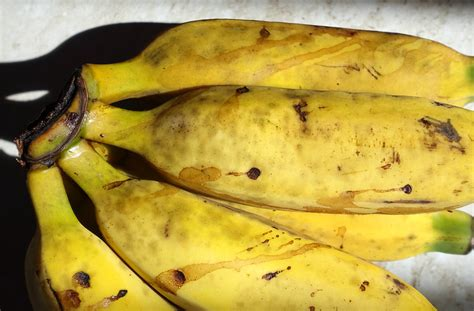 Banana: Sap stain and sooty mold | Scot Nelson | Flickr