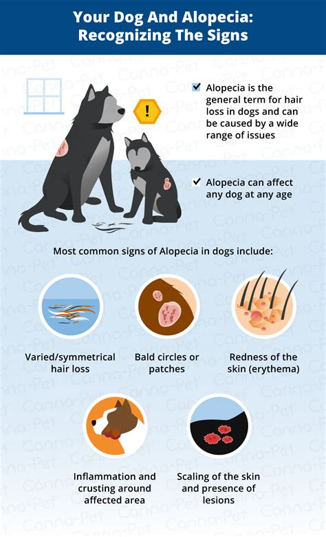 Dog Hair Loss: Common Causes & Treatment | Canna-Pet